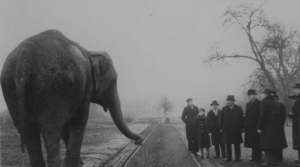 Warszawskie zoo (zdjęcie ilustracyjne)  Muzeum Historii Żydów Polskich