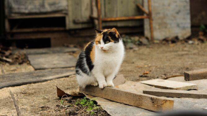 Jak relacja kotów z ludźmi wyglądała tysiące lat temu? Kocia dieta skrywała odpowiedź