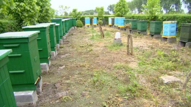 Pszczoły wróciły do Przyczyny Dolnej. <br />Trwa odbudowywanie pasiek