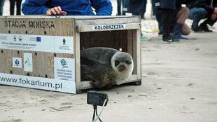 """""""Nie ma czegoś takiego jak polska foka. Foki są międzynarodowe"""""""