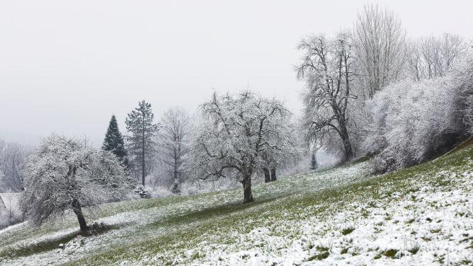 Pogoda na dziś: miejscami śnieg i deszcz ze śniegiem, do 7 stopni